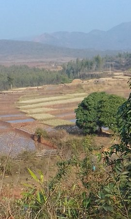 Koraput District, Indie: Walking over the hills to paddy fields
