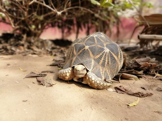 Область Мандалай, Мьянма: On the way to Bagan Sightseeing 3 placesq # Star Tortoise Camp # Son Lon Monastery # Mount Popa