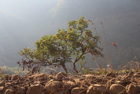 Chilkahrada Wild Life Sanctuary
