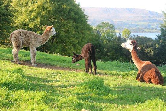 Curraghduff Farm