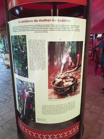 Parte cultural da amazônia