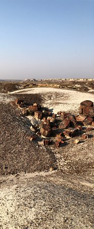 Petrified Forest National Park: Petrified Forest