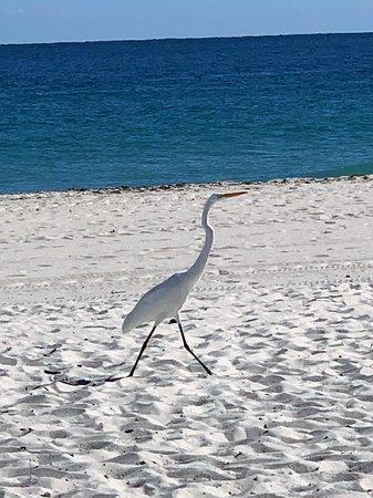 Plunge Beach Resort: Natur pur