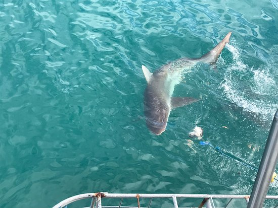 Shark Bookings-  Day Tour