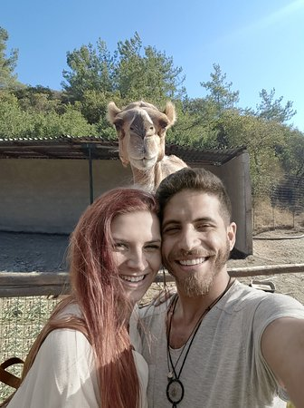 Get your selfie withe the camels!