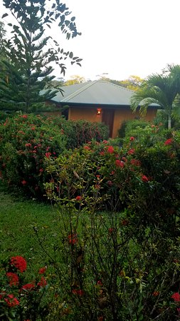 Ostional, Costa Rica: Our cabin! The vegetation around all the cabins is gorgeous.
