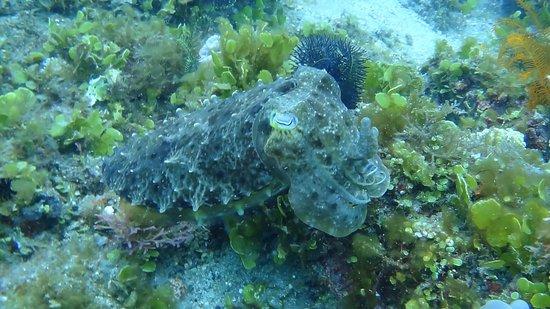 Pulau Lembeh, Indonesia: Lembeh Resort