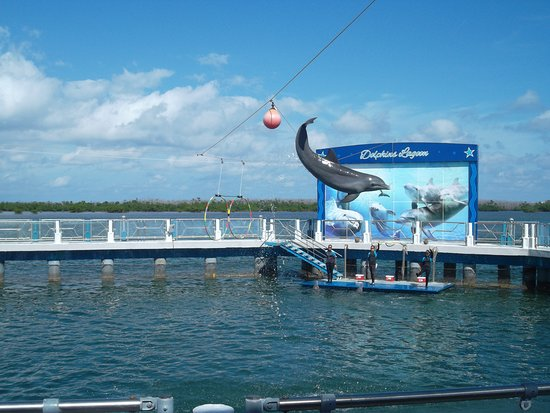 Delfinario en Cayo Santa Maria : The dolphin show was so entertaining for all ages.  Staff did a great job with crowd interaction too!