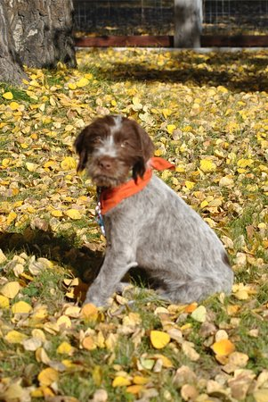 """Fort Klamath, OR: Aspen Inn's new addition! """"Mac"""" is looking forward to meeting you."""