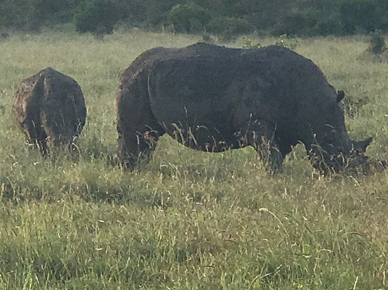 Day Tour: Giraffe Center, Elephant Orphanage and Nairobi National Park: momma rhino and her baby