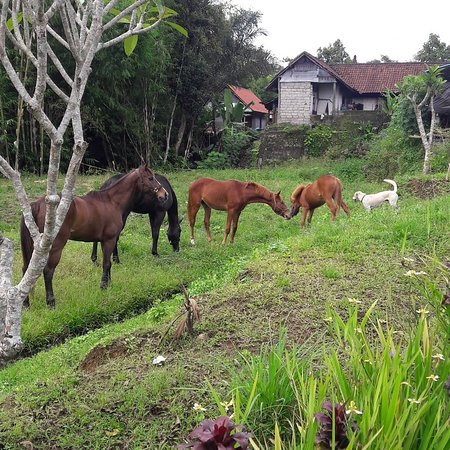 Ubud Horse Stables: Lovely family... 😘😘😘😘