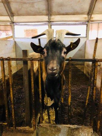 Barni, Италия: La fattoria dietro