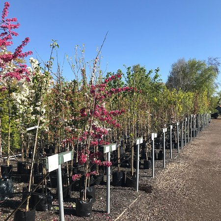 Little Canfield, UK: Ornamental trees for all seasons