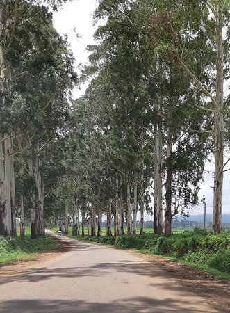 Pindaya, Myanmar: Nice Road