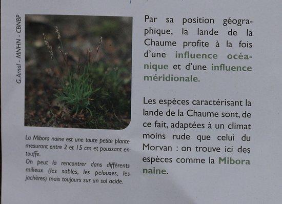 Le Creusot, França: La Bourgogne nature : La LANDE de la Chaume au Creusot - Sentier de découverte et balisé - Ouvert toute l'année - C'est gratuit