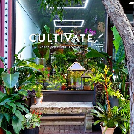 Evanston, IL: Front window of Cultivate Urban Rainforest & Gallery