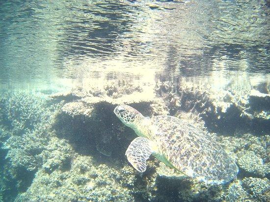 Grande barrière de corail, Australie : DURANTE UNA IMMERSIONE NELLA GRANDE  BARRIERA CORALLINA AUSTRALIANA-CAIRNS-AUSTRALIA SUD PACIFICO-FOTO MAURO PORTO TORRES-