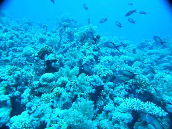 Jolie Promenade sur les Coraux de Gordon Reef