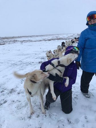 Dogsledding Iceland: Making a very good friend even though her partner was jealous! Make sure you give every dog love and attention! Each dog loves to be petted on the breaks.