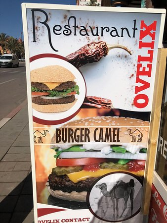 Burger Camel Ovelix