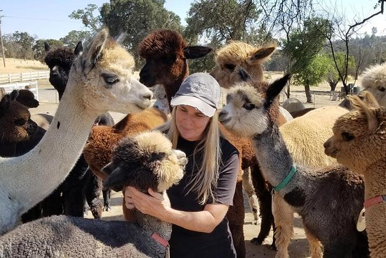 Epic Alpacas Tours