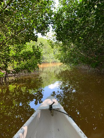 canoe tour through the mangroves