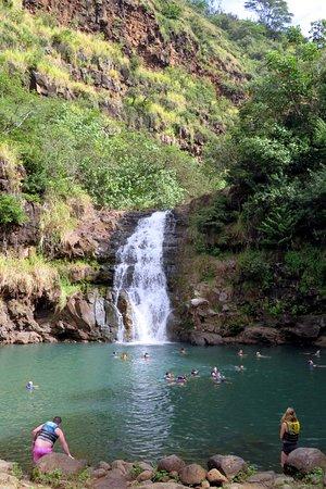 Waimea Arboretum And Botanical Garden Oahu 2019 All