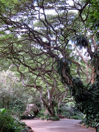 Last Minute Car Rental Deals >> Waimea Arboretum and Botanical Garden (Oahu) - 2020 All ...