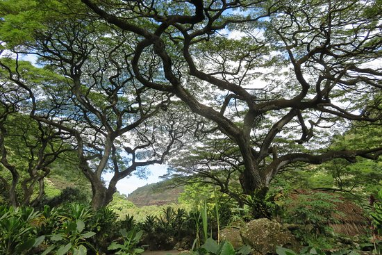 Waimea Arboretum and Botanical Garden