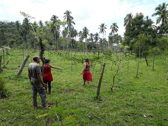 Frutos Pachamama: paseos entre plantaciones de curcuma y passion fruit.