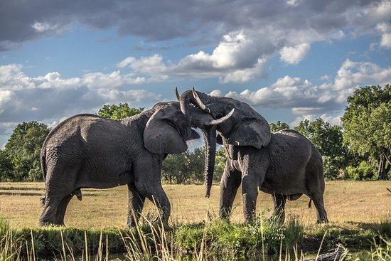 Parc national du Serengeti, Tanzanie : Elephant Playing