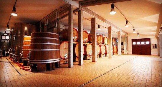 Cantalupo, Italy: The Cellar