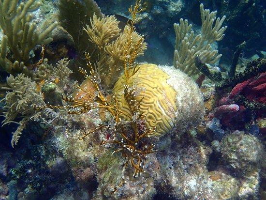 South Water Caye, Belize: snorkeling