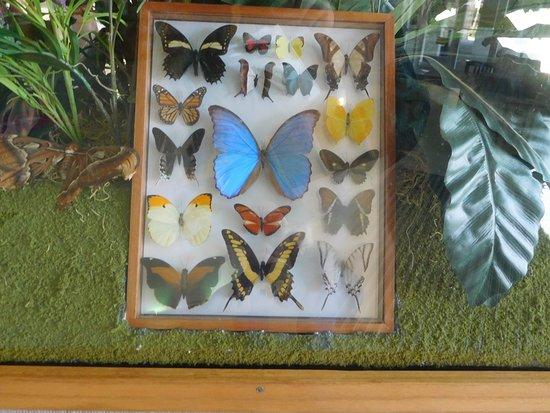 Jennings, FL: FL Butterfly Exhibit