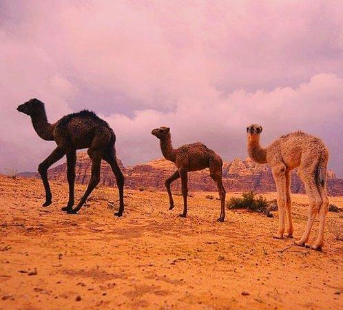 Via Wadi Rum Camp