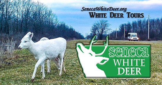 ‪Seneca White Deer‬