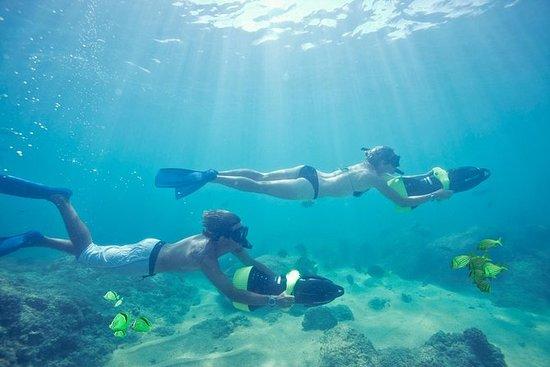Los Cabos Sea Adventure: Snorkeling...