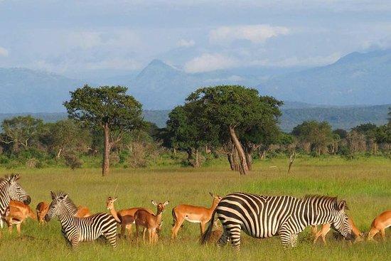 2-Nights Mikumi National Park Safari...