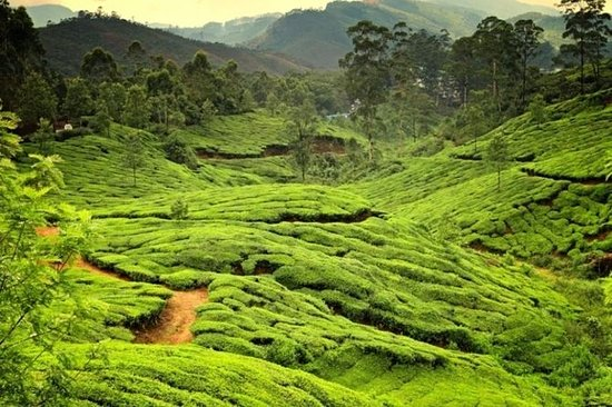6-Night Private Kerala Tour from Kochi