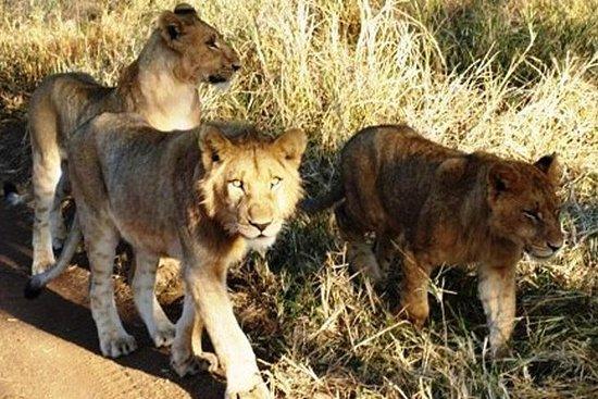 Rhino and Lion Park Guided Safari...