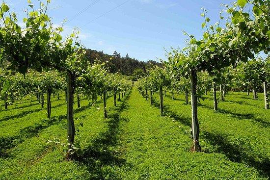 Vinho Verde groepstour: bezoek Ponte ...