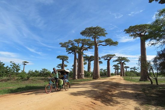 5-dagers tur Baobab Avenue Express...