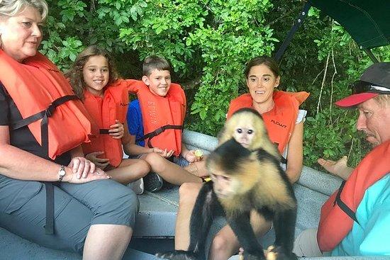 Visita privada en barco a la isla de los monos en el Canal de Panamá : Private Monkey Island Boat Tour at the Panama Canal