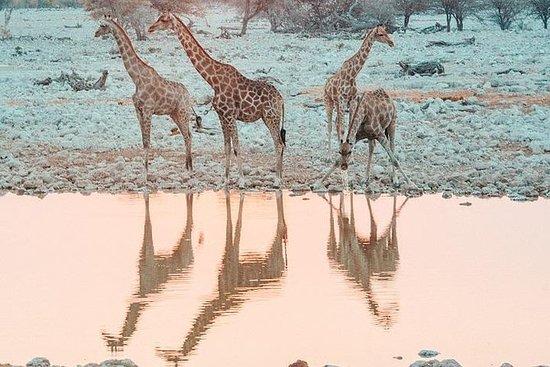 11-dagers Overland Cape Desert Safari...