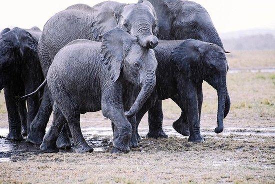 13-Day Overland Kenya and Tanzania...