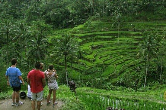 Tour privado de Bali Ubud y Kintamani...