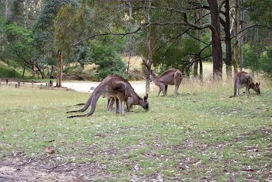 Private Guided Tour : Blue Mountains...