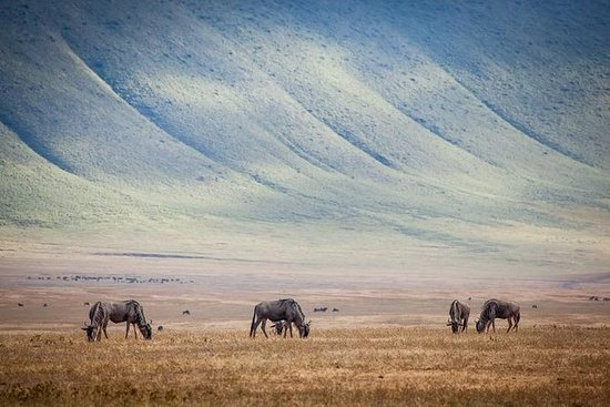 为期10天的肯尼亚和坦桑尼亚4WD Safari Adventure