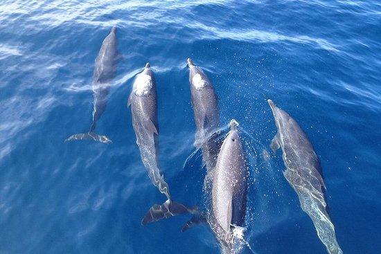 Delfin og snorkling tur med Costa...