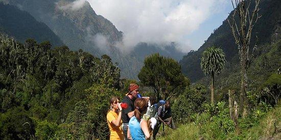 Rwenzori Mountains National Park, Uganda: Mountain Rwenzori Trekking